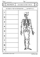 Squelette humain vierge à compléter